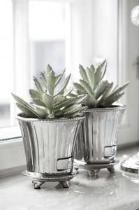 plantacactus