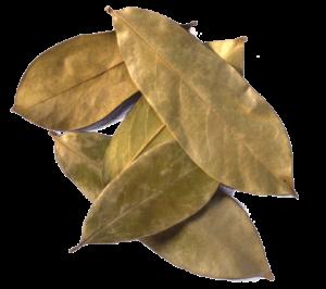 Graviola hojas 2
